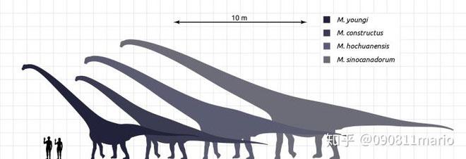 Mamenchisaurus là một chi khủng long Sauropoda nổi bật với cái cổ dài