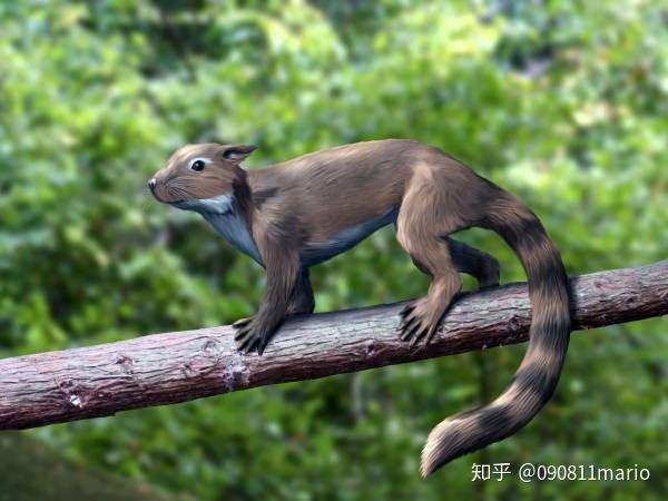 Sineleutherus có hình dáng giống sóc hoặc chuột nhà.