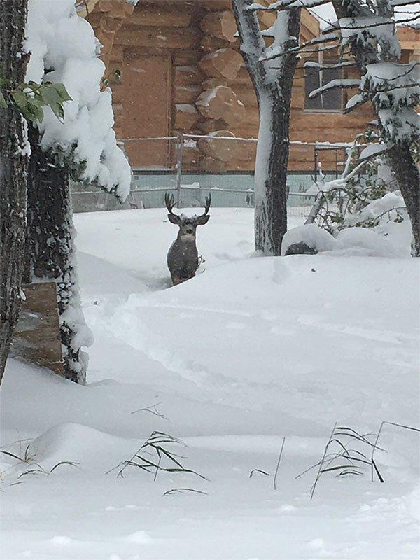 Lượng tuyết rơi dày hơn 1m được ghi nhận là mức kỷ lục so với thời điểm đầu thu.