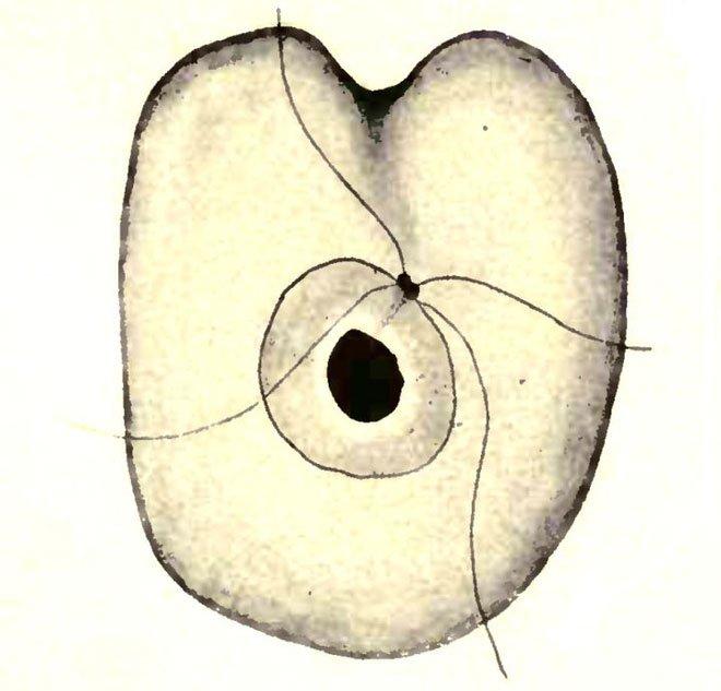 Collodictyon triciliatum lần đầu tiên được tìm thấy trong phù sa ở một hồ nước