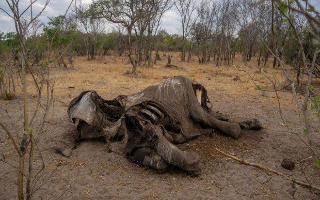 Xác của một con voi ghi nhận hồi đầu tháng 6.
