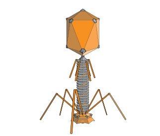 Hình dáng của một thể thực khuẩn được xây dựng bằng 3D.