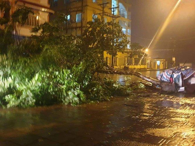Nhiều cây mới trồng bị bật gốc trong cơn gió bão.