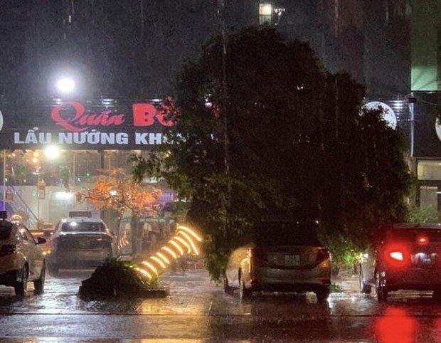 Cây xanh trên phố ở Móng Cái bị bật gốc.