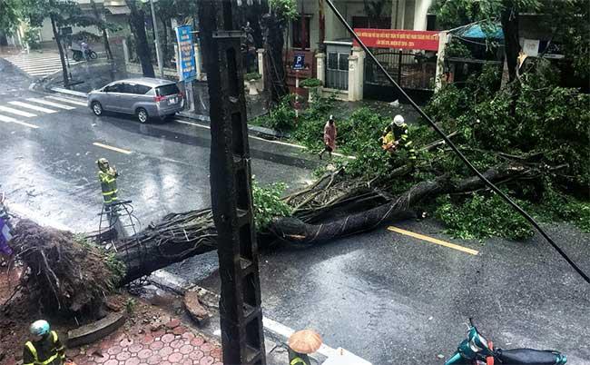 Trong ảnh là một cây cơm nguội trước cửa nhà 69 Tô Hiến Thành (quận Hai Bà Trưng).