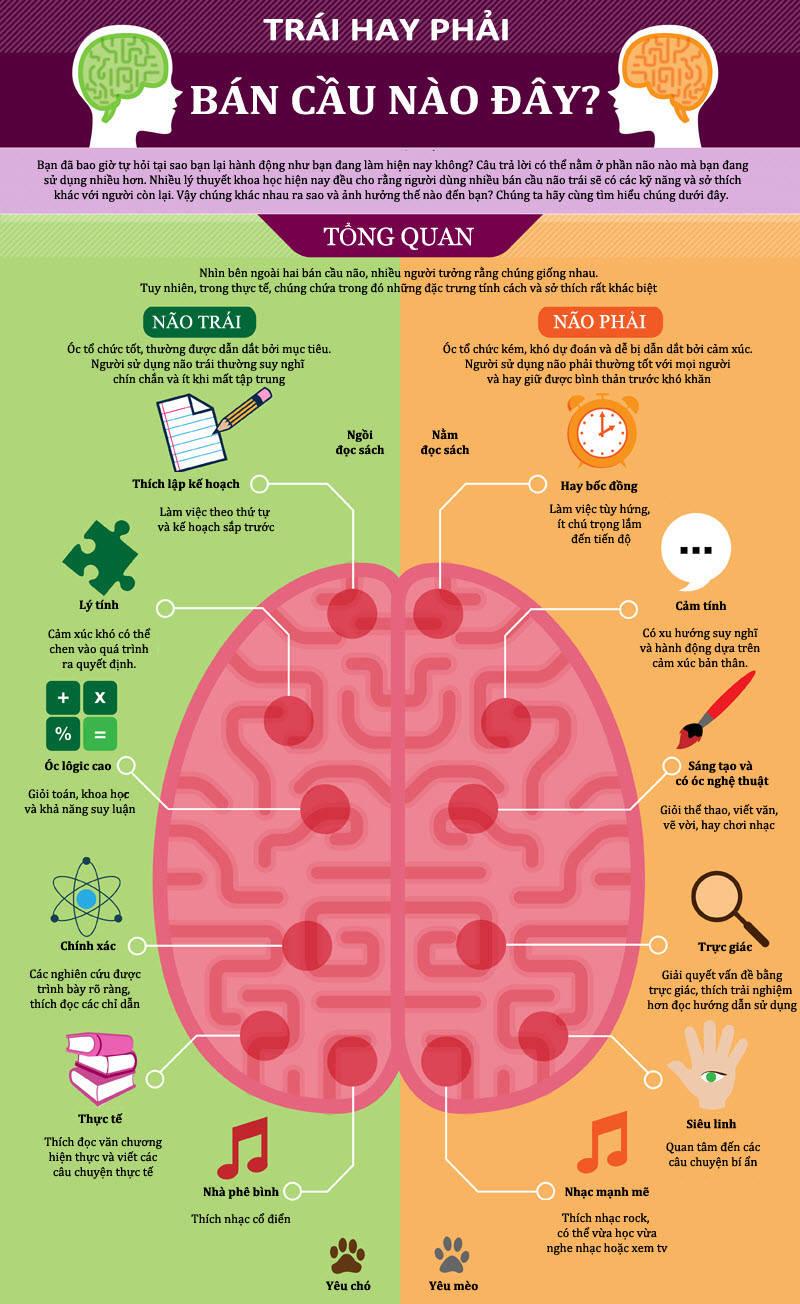Bán cầu não trái có chức năng ngôn ngữ, chịu trách nhiệm xử lý những thông tin