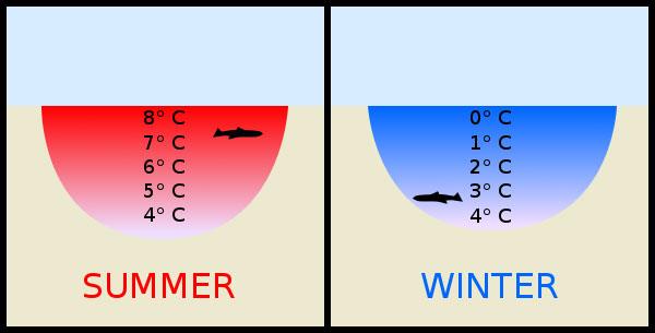 Khi nhiệt độ ở dưới mức 4 độ C, bản chất của nước thay đổi 180 độ, chúng gặp lạnh thì nở mà gặp nóng thì co.