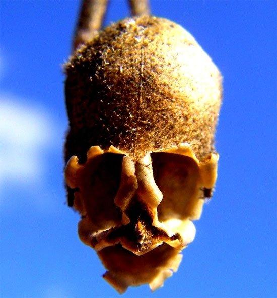 Các loài thực vật có hình dáng hài hước đến đáng sợ