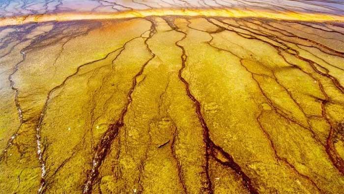 Dưới bề mặt Trái đất có những vi sinh vật - hậu duệ của các dạng sống cổ đại.