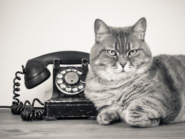 Phương pháp biến mèo thành điện thoại có thể sử dụng cho những môi trường bị cách âm.