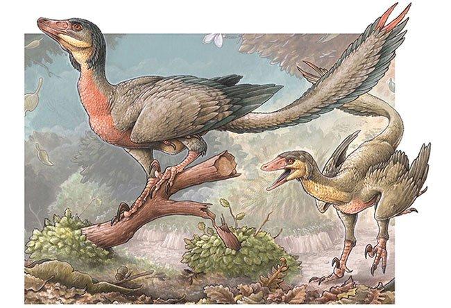 Hình vẽ mô phỏng loài Overoraptor chimentoi sống trong kỷ Phấn Trắng.