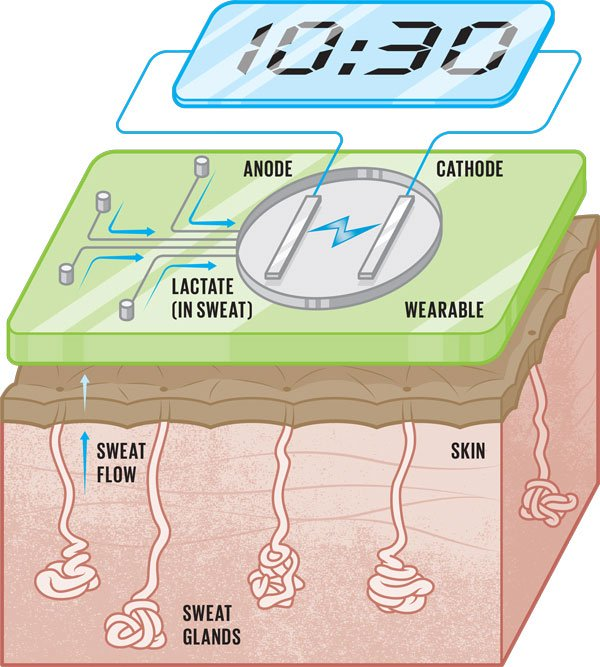 Mồ hôi không phải là nguyên liệu sinh học duy nhất chúng ta có thể tận dụng từ cơ thể.