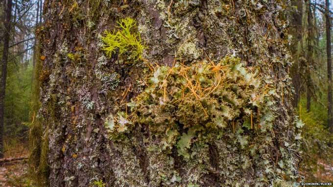 Vỏ cây là một trong những yếu tố quyết định khả năng hấp thụ âm thanh ở thực vật.