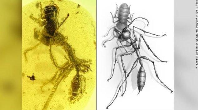 Kiến địa ngục đã tuyệt chủng trước khi tổ tiên của loài kiến hiện đại xuất hiện