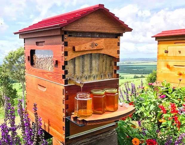 Tổ ong thông minh