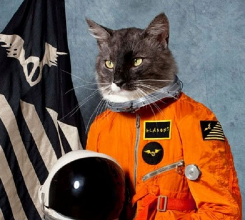 Mèo được huấn luyện trong 5 năm nhưng thí nghiệm thất bại, nó lao vào taxi và chết tại chỗ.
