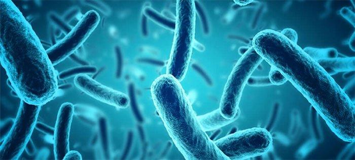 Mỗi năm ước tính có khoảng 700 nghìn người trên thế giới bị chết do bị kháng các thuốc kháng vi.