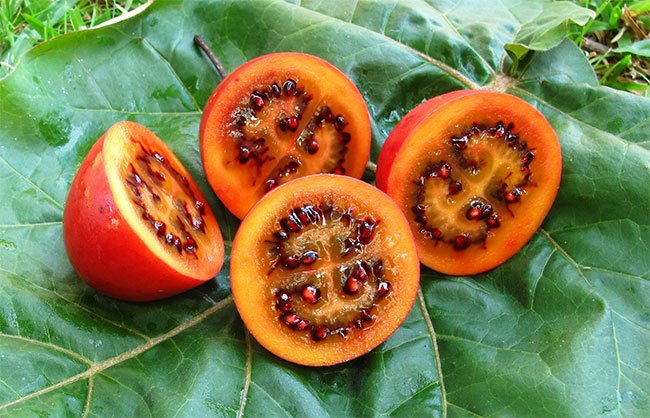 Cà chua Mỹ