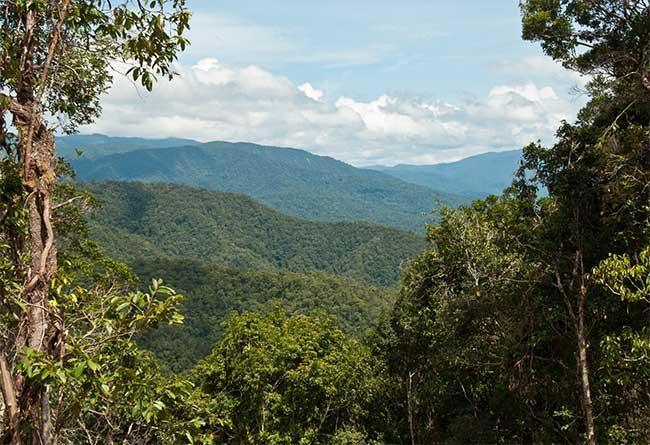 Các cánh rừng nguyên sinh còn gần như nguyên vẹn tại New Guinea