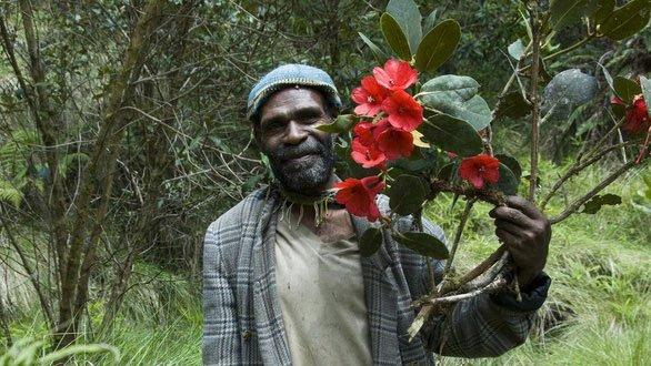 Một loài hoa đỗ quyên mới tại New Guinea