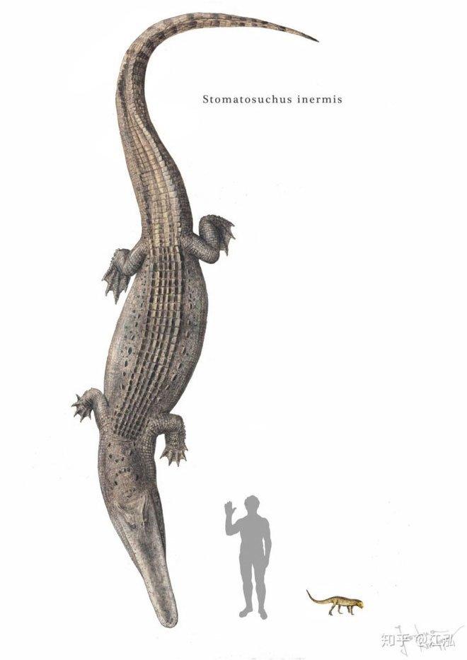 Stomatosuchus có lẽ là một trong những loài cá sấu kỳ lạ nhất thời cổ đại.