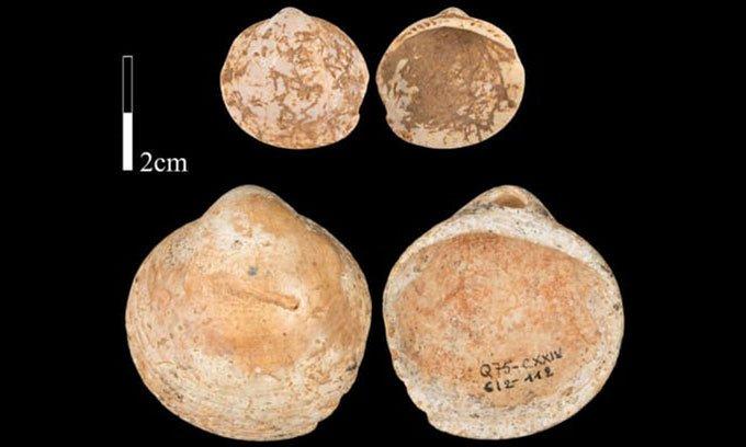 Những mảnh vỏ sò cổ xưa trong hang Qafzeh.