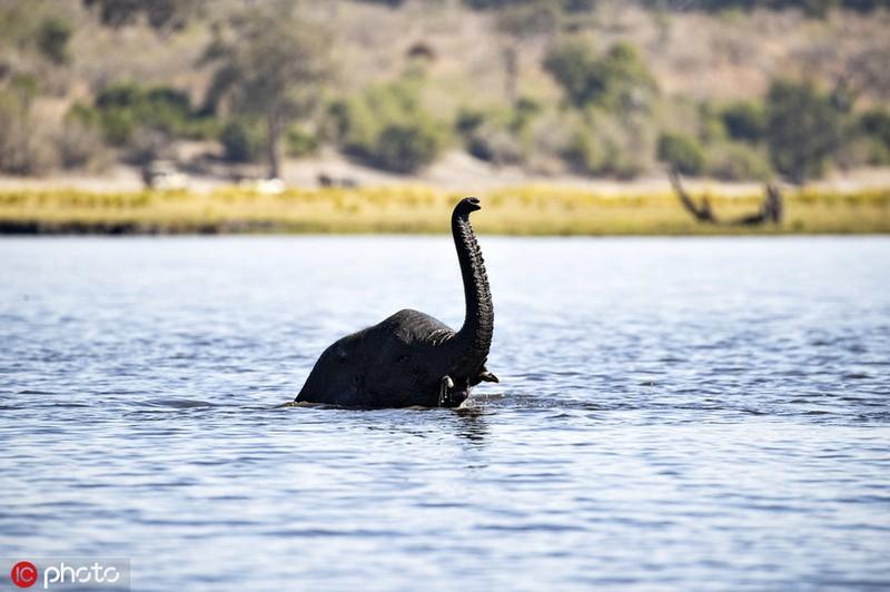 Ngo thuy quai ho Loch Ness chay den chau Phi, hoa ra bat ngo...-Hinh-2