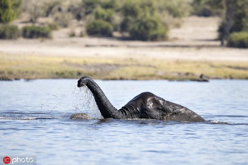 Ngo thuy quai ho Loch Ness chay den chau Phi, hoa ra bat ngo...-Hinh-3