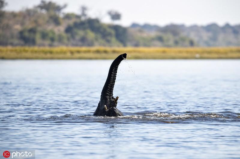 Ngo thuy quai ho Loch Ness chay den chau Phi, hoa ra bat ngo...-Hinh-5