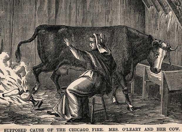 Câu chuyện con bò gây ra Đại hỏa hoạn Chicago thực chất chỉ là bịa đặt.