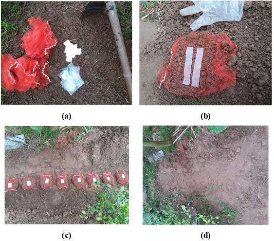 Việt Nam sản xuất túi nilon tự hủy thành... nước