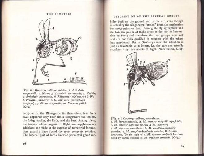 Loài động vật kì lạ nhất Trái đất, dù có chân nhưng lại dùng mũi để di chuyển
