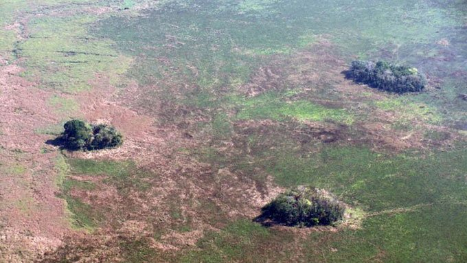 Các đảo rừng trên thảo nguyên Llanos de Moxos.