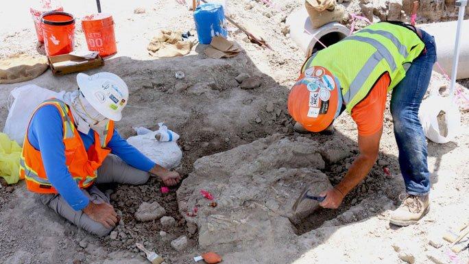 Các nhà cổ sinh vật học đã tiếp quản hiện trường khi dự án xây dựng hóa cuộc khai quật