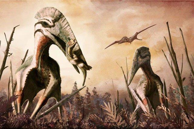 Nếu đứng thẳng, loài thằn lằn bay này cao tương đương với một con hươu cao cổ trưởng thành.