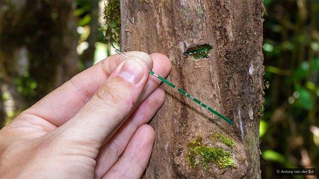 Thực vật chúng tích trữ niken trong chồi, lá, rễ hay nhựa cây.