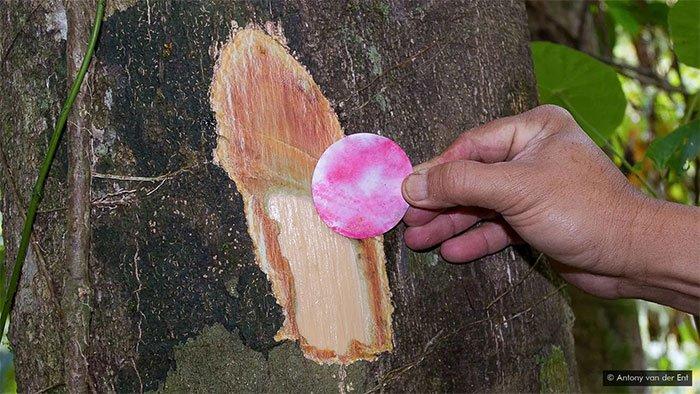 Mẩu giấy kiểm tra nhanh sẽ chuyển sang màu hồng khi tiếp xúc với niken.