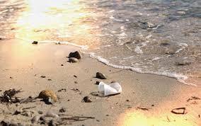 Một chiếc cốc bằng nhựa polystyrene lăn lóc bên bờ biển - Ảnh: Jayne Doucette. Viện hải dương học Woods Hole
