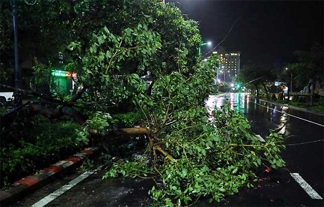 Cây ngã ở trung tâm TP Tuy Hòa.