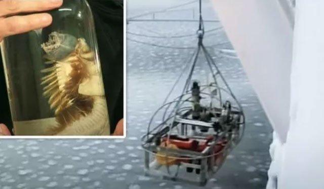 Sinh vật kỳ lạ được các nhà khoa học đưa lên từ nước sâu.