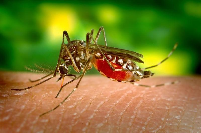 Dị nhân có thể giết muỗi cách xa 6 dặm chỉ nhờ xì hơi