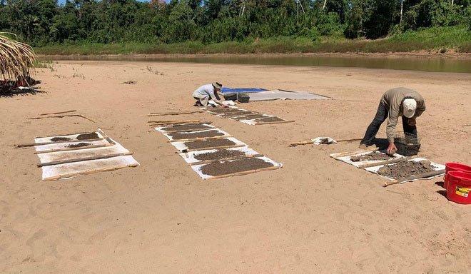 Các nhà khoa học khai quật mẫu hoá thạch của loại khỉ tiền sử trên bờ sông Yurua trong rừng Amazon.