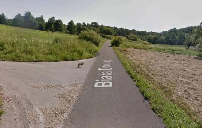 Google Street View ghi lại cảnh xe chụp hình đường phố đâm phải con thỏ lao qua đường - Ảnh 1.