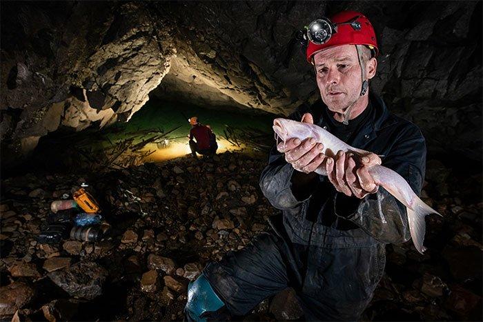 Daniel Harries tìm thấy loài cá lớn trong hang Um Ladaw ở Ấn Độ