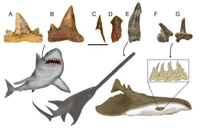Hóa thạch răng cá và các phiên bản tái tạo.