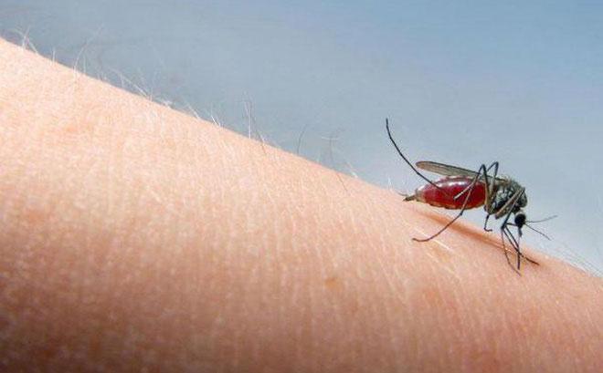 Muỗi vằn và muỗi anofen được biết đến với sở thích là máu người.