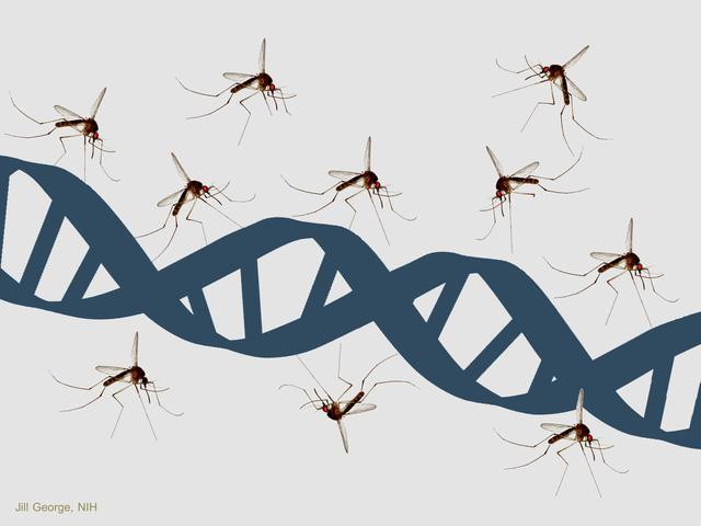 85% lí do cho việc ai đó bị muỗi đốt nhiều hơn liên quan đến tính trạng di truyền.