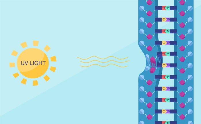 Có nhiều dạng sai sót trong ADN như các Nucleotide tạo nên ADN bị hư hại