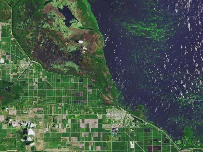 Hồ Okeechobee ở Florida (Mỹ) cũng ánh lên sắc màu xanh lá cây sáng