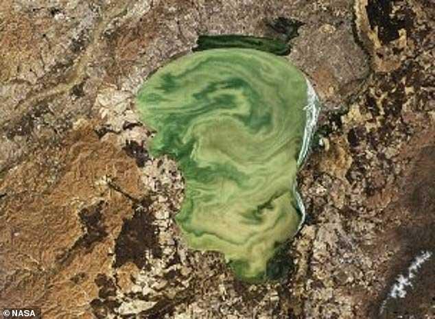 Một sắc độ xanh chết chóc khác xuất hiện ở hồ Khanka, biên giới Nga và Trung Quốc